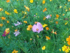 jessica james flowers