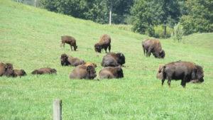 jessica james bison